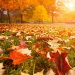 Goldener Herbst – Achten Sie auf Ihre Gesundheit!