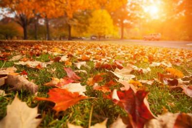 ROLLENLAND gelbe Blätter im Herbst