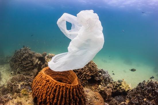 Plastiktüten_Meer