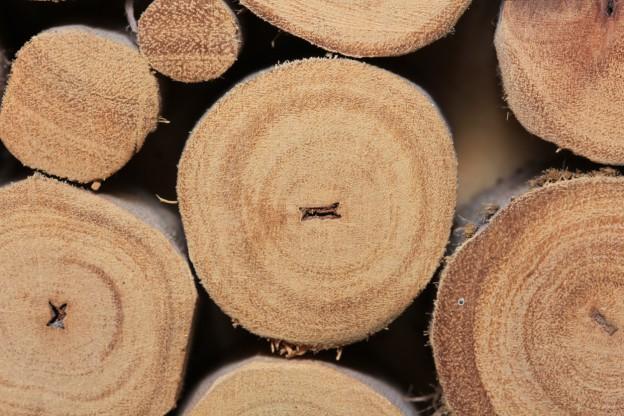 Nahaufnahme gestapelter Holzstämme