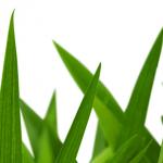Graspapier – die Revolution in der Papierindustrie?